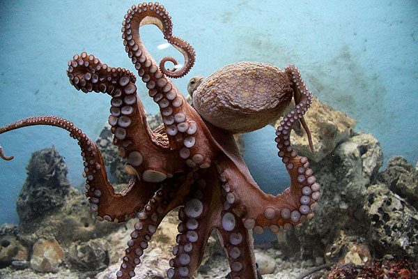 Nagyon látványos Pulán az akvárium is